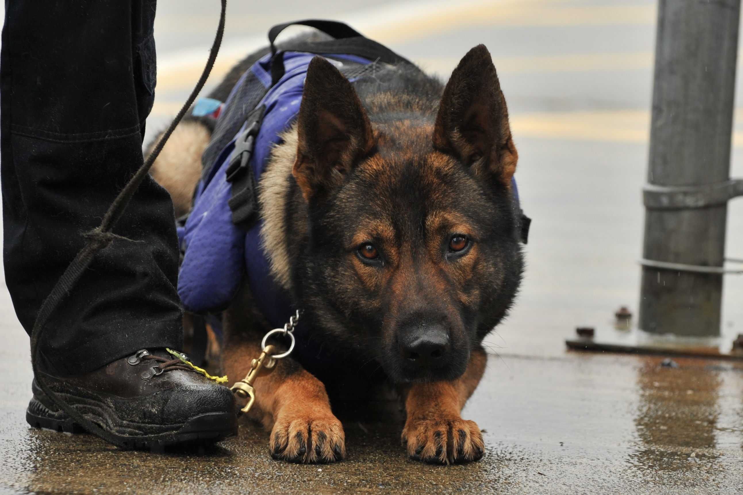 Image from: Vancouver Police Dog Squad Website