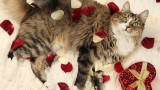 Valentine-Day-Gift-Ideas-Pets