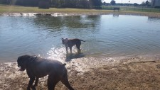Dogs loved the pond.